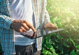 crop-insurance-fraud