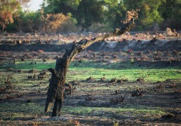 forest-encroachment-monitoring-agriculture