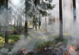 forest-fire-monitoring